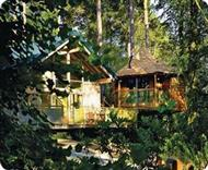 Blackwood Forest Lodges in Hampshire